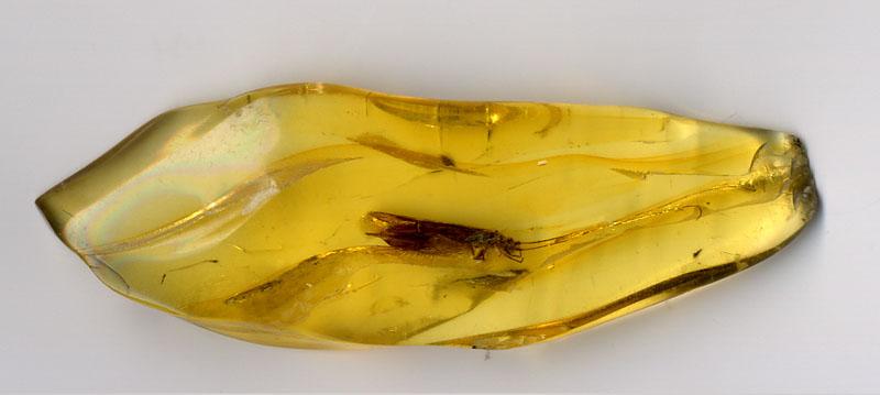 Bernstein mit eingeschlossenen Insekt in schöner Farbe